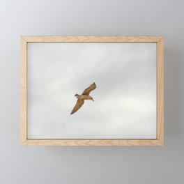 Seagull bird flying Framed Mini Art Print