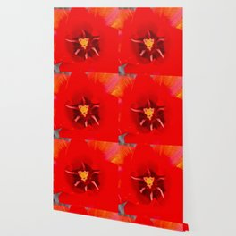 Macro Red Tulip Wallpaper