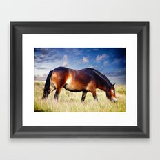 exmoor pony Framed Art Print