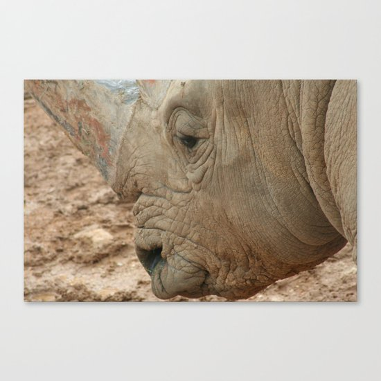 Israeli Rhino Canvas Print