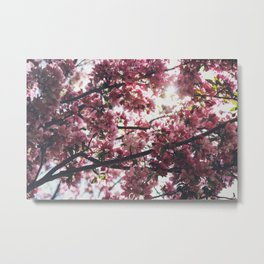 Flower Photography by Jessica Fadel Metal Print