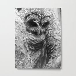 Black and White Owl Close Up Metal Print