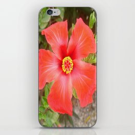 Head On Shot of a Red Tropical Hibiscus Flower iPhone Skin