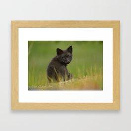 Coy Framed Art Print