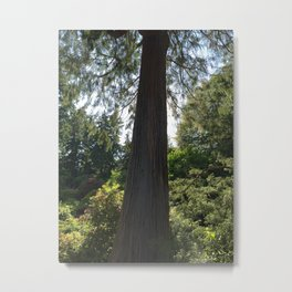 Tree silhouette - Kubota Garden - Seattle Metal Print