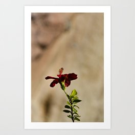The Red Flower Art Print