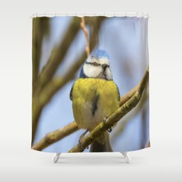 Blue tit on branch, Eurasian blue tit, (Cyanistes caeruleus) Cute little Bird Shower Curtain