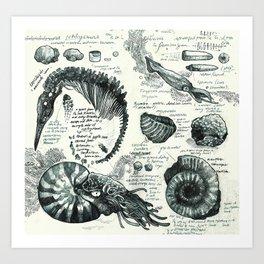 Sketchbook - Fossils Art Print