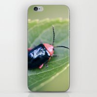 beetle iPhone & iPod Skins featuring Beetle by BURNEDINTOMYHE∆RT♥