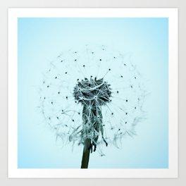Dandilion flower Art Print