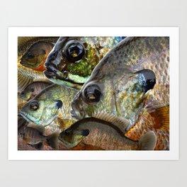 Bluegill Kaleidoscope 2 Art Print