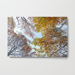 """Up in the air II"". Autumn colors Metal Print"