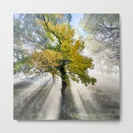 Dreaming. Into the foggy woods. Metal Print
