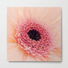 Pink Germini Close up 3 Metal Print