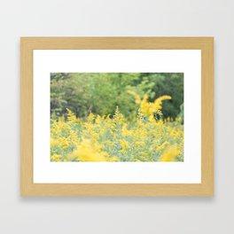 Field of Goldenrod Framed Art Print