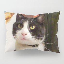 Orazio the charming cat Pillow Sham