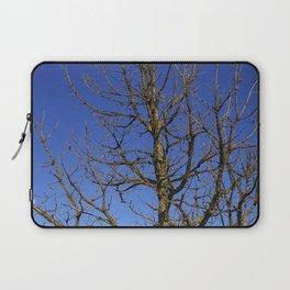 Bur Oak, Quercus macrocarpa, Wisconsin tree, prairie, savanna Laptop Sleeve