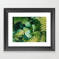 Green fern Framed Art Print
