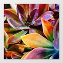Spectacular Succulents by klaraacel