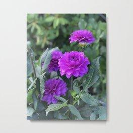 Purple flower in Butchart's Garden Metal Print