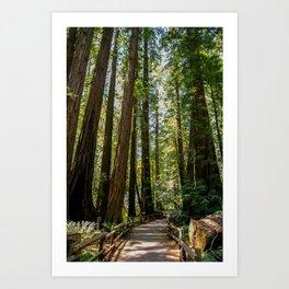 Muir Woods National Monument Art Print