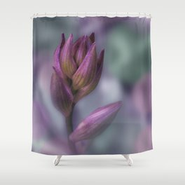 Hosta Flower Bud Purple And Green Shower Curtain