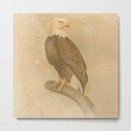 Vintage Bird Neck Gator Vintage Birds Bald Eagle Metal Print