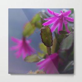Magenta Blooming Cactus Metal Print