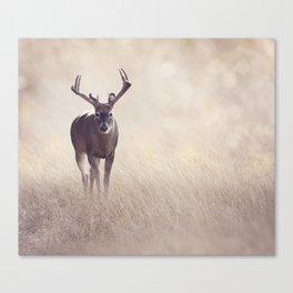 Male Deer in a grassland Canvas Print