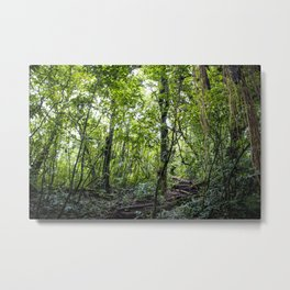 Hiking through the Rainforest on the side of the Mombacho Volcano in Nicaragua Metal Print