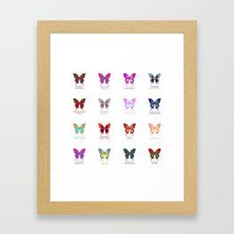 Butterflies 16 Framed Art Print