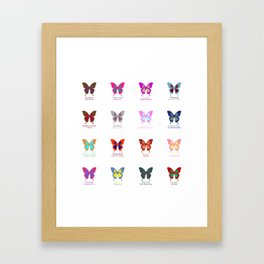 Butterflies 16 Framed Art Print