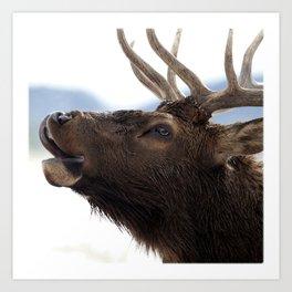 Watercolor Elk Bull 57, Estes Park, Colorado, Bugler Art Print