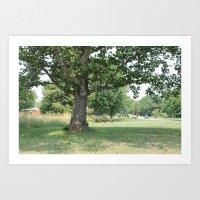 Still Tree Art Print