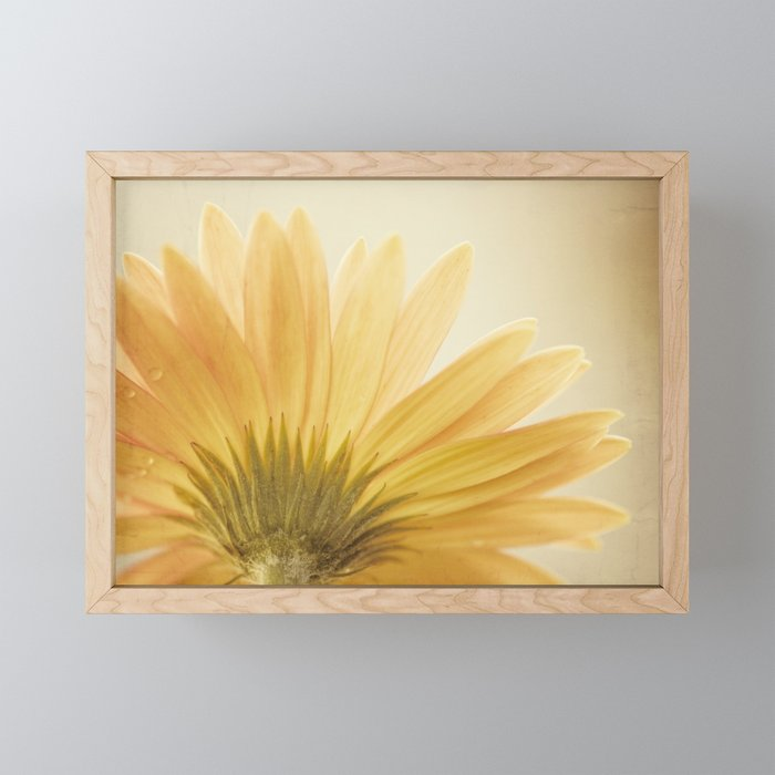 Gold Yellow Flower Photography, Golden Daisy Floral Photo, Nature Botanical Macro Picture Framed Mini Art Print