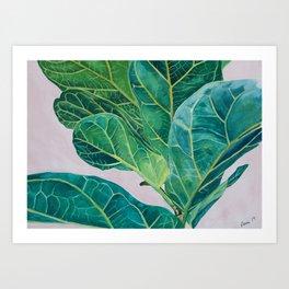 Ficus lyrata Art Print