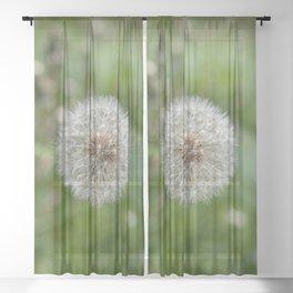 Shower head, infruttescence of the dandelion flower Sheer Curtain