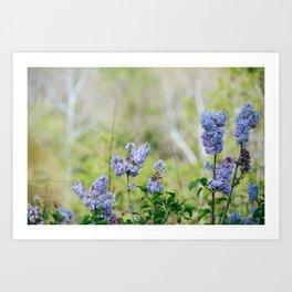 Lilac Summer Art Print