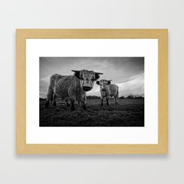 Two Shaggy Cows Framed Art Print