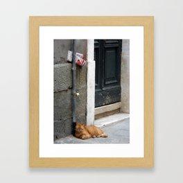 Orange Cat Sleeping, Venice, Italy Framed Art Print