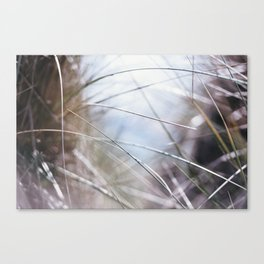 Sand Dune Grasses Perranporth Canvas Print