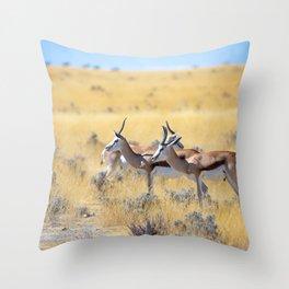 Springboks Antelope Desert Throw Pillow