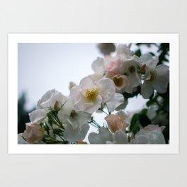 Roses and Raindrops: White Art Print