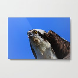 Just a Nibble Metal Print