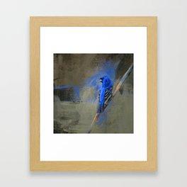 Royal One Framed Art Print