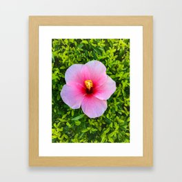 Flower Bloom Pink Framed Art Print