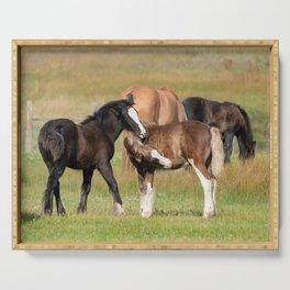 Gypsy Vanner Foals 0371 - Colorado Serving Tray