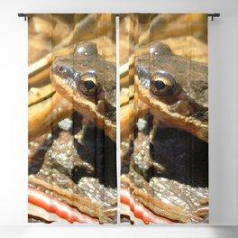 Watercolor Amphibian Western Chorus Frog 04, Feelin' Chirpy Blackout Curtain