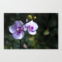 orchid Canvas Prints featuring Orchid by MVision Photography