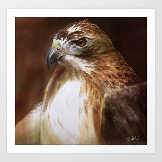 Red-Tailed Hawk Art Print